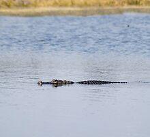 Gator Blues by Donna Adamski