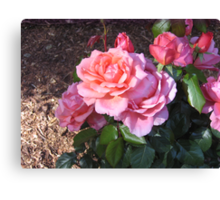 """Sweet Fragrance"" Rose Canvas Print"