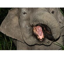 Borneo Elephant Portrait Photographic Print