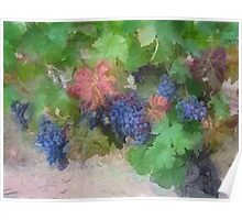 Grapes Painting Poster