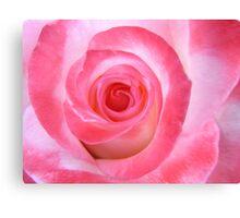 Pink White Rose Canvas Print