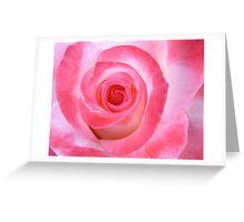 Pink White Rose Greeting Card