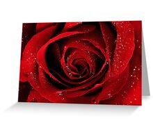 """Rose for the """"UNCONVENTIONAL flower"""" challenge avatar Greeting Card"""