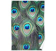 Peacock tail Feathers Poster