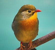 Bird  by eprather95