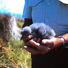 Baby Mutton Bird by georgieboy98