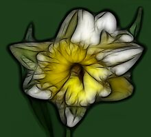 Fractalius Daffodil by Teresa Zieba