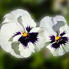 Cute As They Come - Pair of Sunlit Pansies by BlueMoonRose