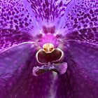 Orchid by Otto Danby II