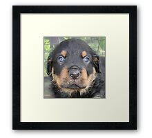 Beautiful Boy - Rottweiler Puppy Framed Print