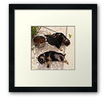 Feeling Grrrr....rottie? Framed Print