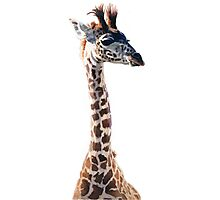 """Little Giraffe"" Wildlife Animal Watercolor Photographic Print"