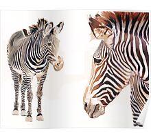 """Zebra Pair"" Watercolor Wildlife Art Poster"