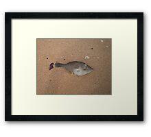 fish death Framed Print
