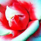 Rose by Adara Black
