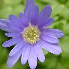 Sadey Flower by Angela Harelson