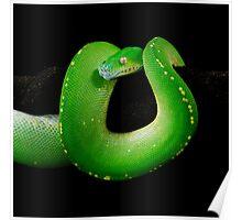 Green Tree Python [Morelia viridis] Poster
