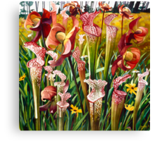 """Pitcher Plants"" Spring Flowers Watercolor  Canvas Print"
