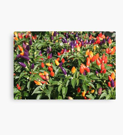 chilli chilli Canvas Print
