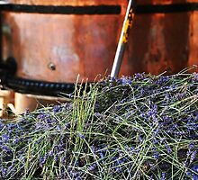 Lavender harvest by Heather Thorsen