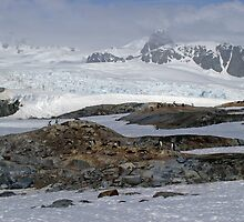 Penguin colony - Antarctica by Derek  Rogers