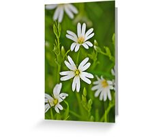 Wild Flowers - Stitchwort Greeting Card