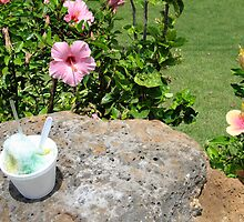 hibiscus and shave ice by JenBeechey