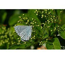 Blue/Grey Photographic Print