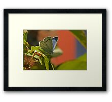 Half Way Open Framed Print