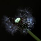 full dandelion by AnaBanana