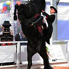 Majorcan horse  by martinspixs