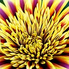 vibrant flowers by Jessy Willemse