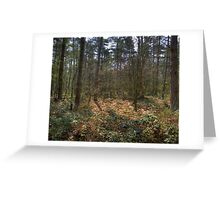Sunlit Glade Greeting Card