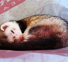 Harlequin Ferret Sleeping by bigbizarre