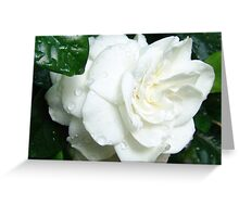White Gardenia Greeting Card