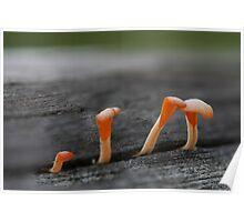 Fungi season 21  Poster