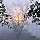 Misty Days 2010 by Pat Moore
