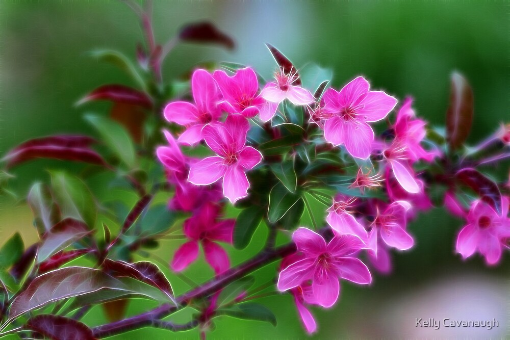 Pink Blossoms by Kelly Cavanaugh