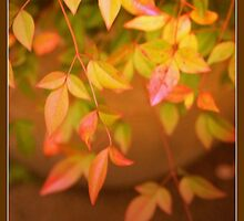 The Autumn Leaves by jmnowak