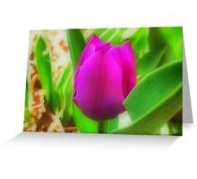 Purple Tulip in HDR (Orton effect) Greeting Card
