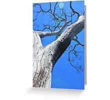 Tree of Light - Nature Background of Age Greeting Card