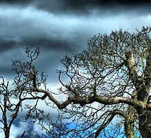 Old Trees by davesphotographics