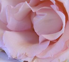 Pink softness by CanDuCreations