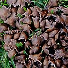 Dozens of tiny brown mushrooms by myraj