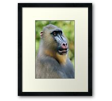 So Handsome Framed Print