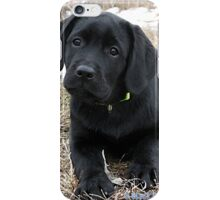 Early Spring Hunt - Black Labrador Puppy iPhone Case/Skin