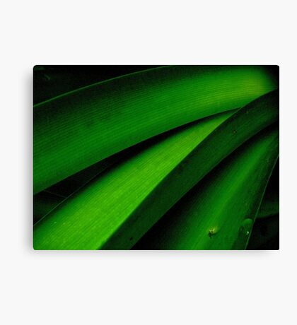 Greener than Green Canvas Print