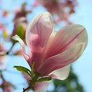 Magnolia by Karen K Smith