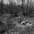 Little Bennett Creek, B&W by audiodef
