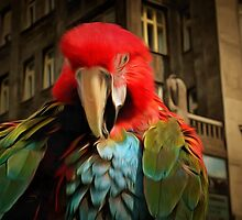 City Life - Scarlet Macaw, the Parrot section by brijo
